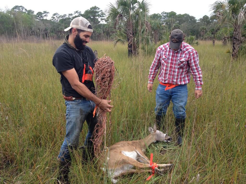 UGA-Deer-Capture-at-FPNWR-Work-Center
