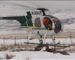 Dragonfly Aviation helps Mule Deer Relocation in Utah